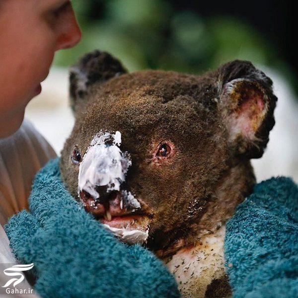 891614 Gahar ir تصاویری دلخراش از آتش سوزی جنگل های استرالیا / 13 عکس