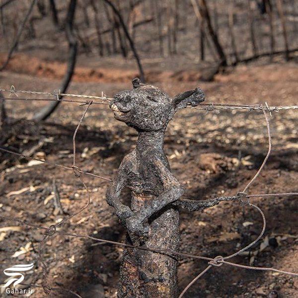 931915 Gahar ir تصاویری دلخراش از آتش سوزی جنگل های استرالیا / 13 عکس