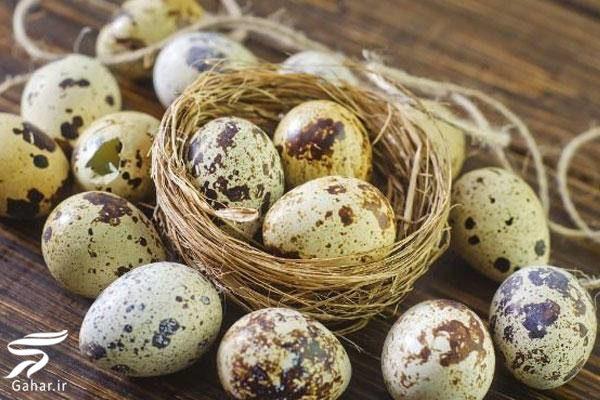 مهمترین خواص تخم پرندگان را بدانید, جدید 1400 -گهر