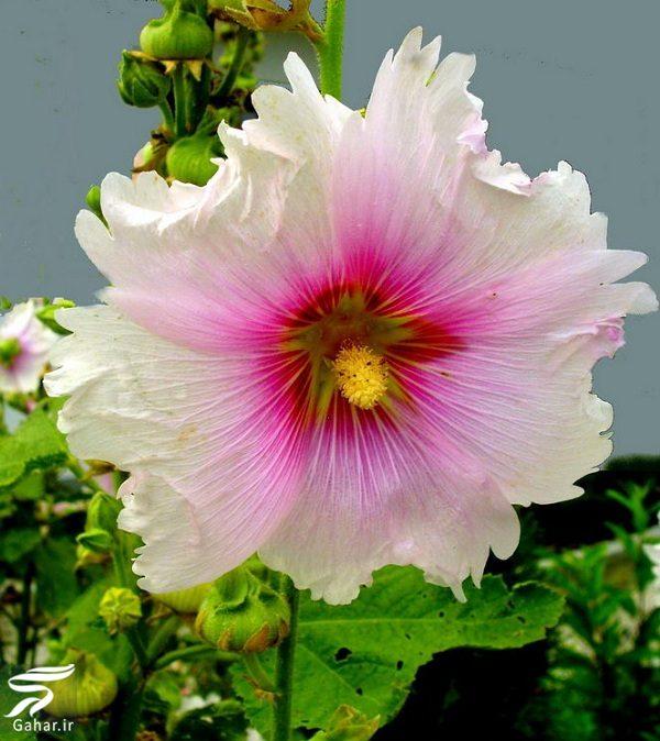 معرفی گیاهان مناسب برای بخور دادن صورت, جدید 1400 -گهر