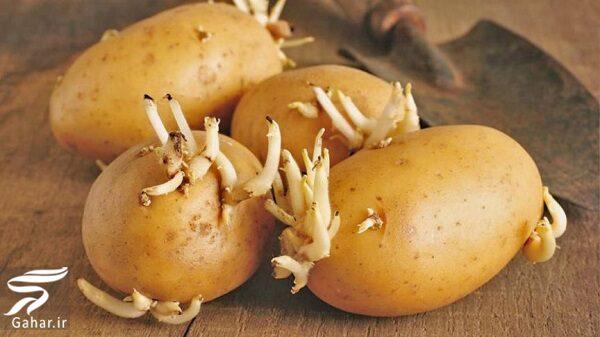 123917 Gahar ir خطر استفاده از سیب زمینی جوانه زده چیست !؟
