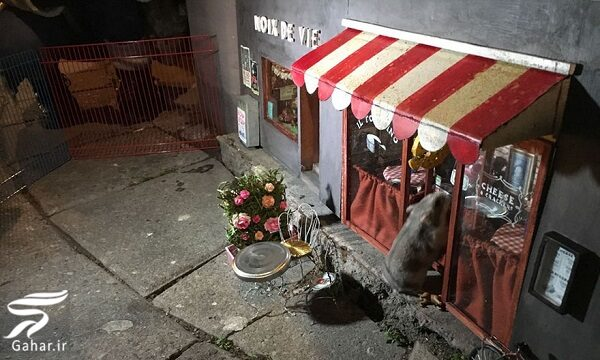 ساخت فروشگاه و رستوران برای موش ها در سوئد / تصاویر, جدید 99 -گهر