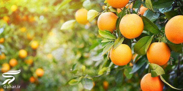 فواید و مضرات پرتقال برای سلامتی