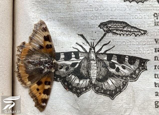 کشف پروانه ای به قدمت ۴۰۰ سال / عکس, جدید 1400 -گهر