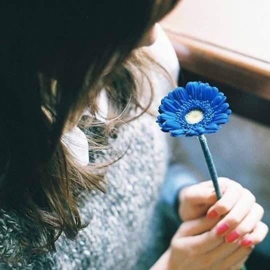 1565702079 عکس گل برای پروفایل واتساپ