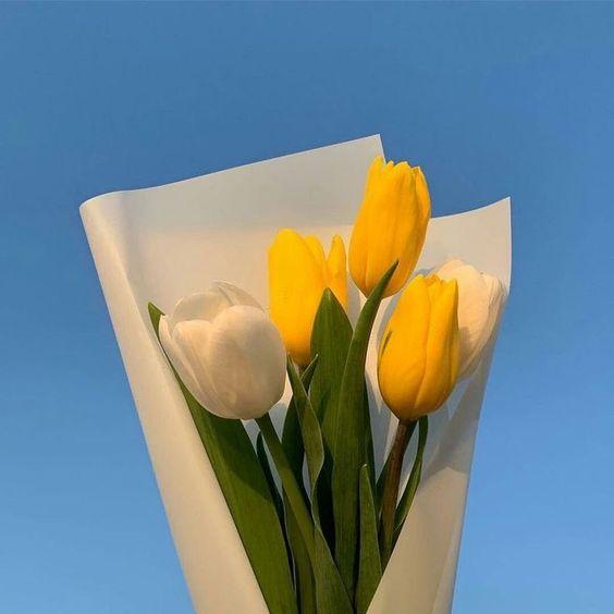 1565719582 عکس گل برای پروفایل واتساپ