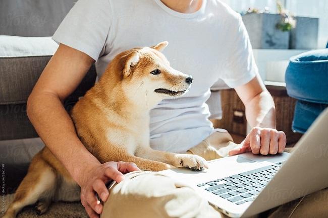 پت شاپ آنلاین در زندگی مدرن چه نقشی دارد؟, جدید 1400 -گهر